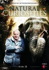 Subtitrare Natural Curiosities (TV Series 2014– )